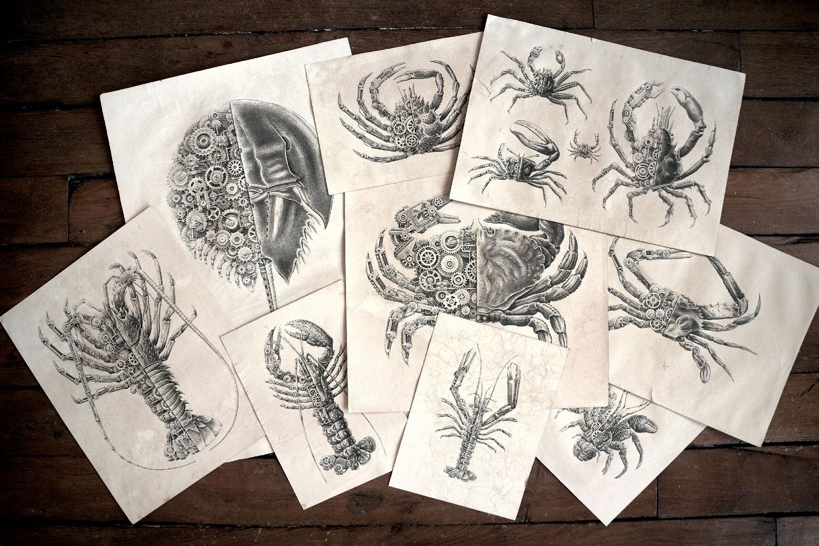 Steeven Salvat Crustacean study 1