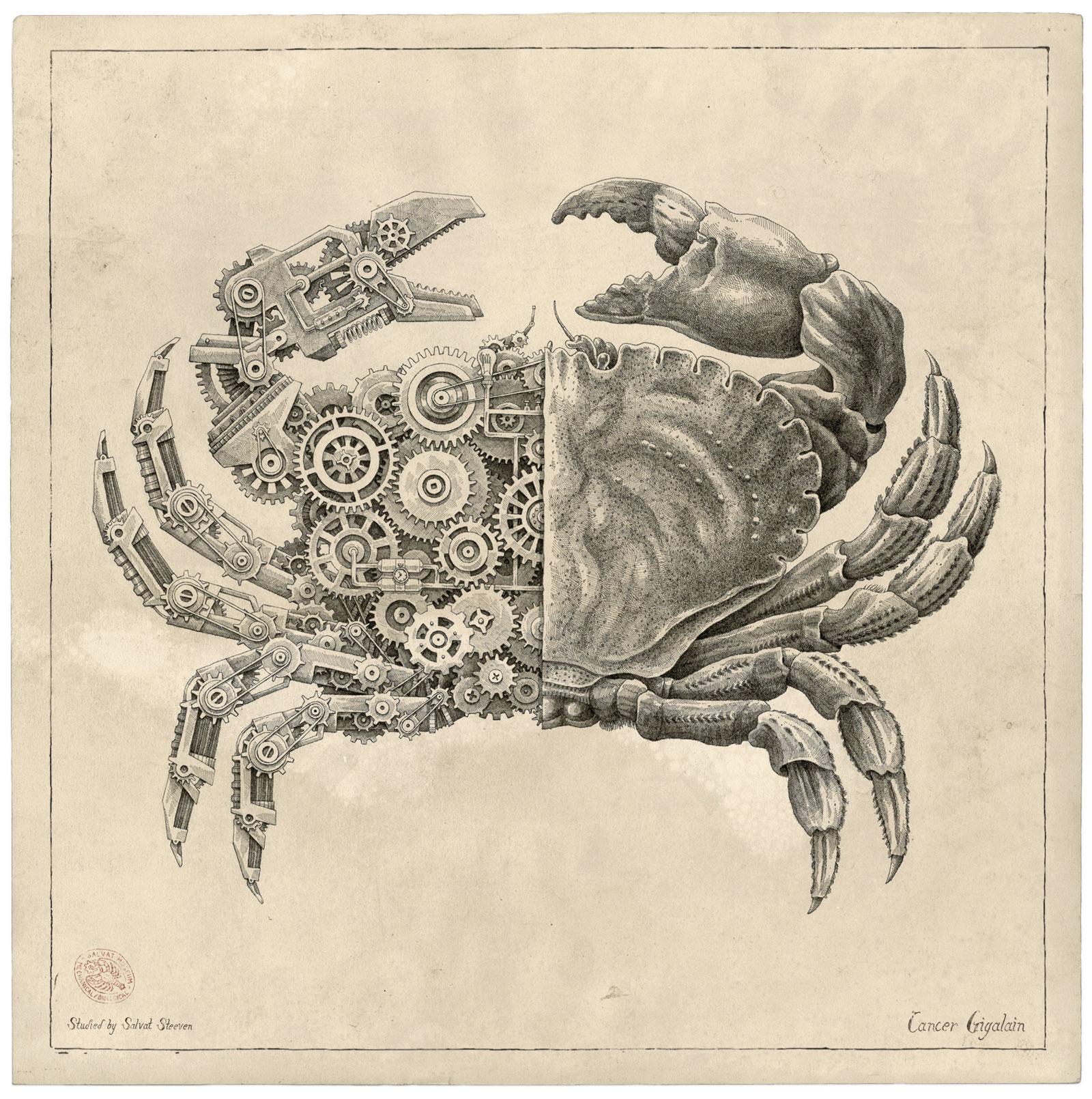Steeven Salvat Crustacean study 2