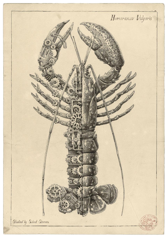 Steeven Salvat Crustacean study 3