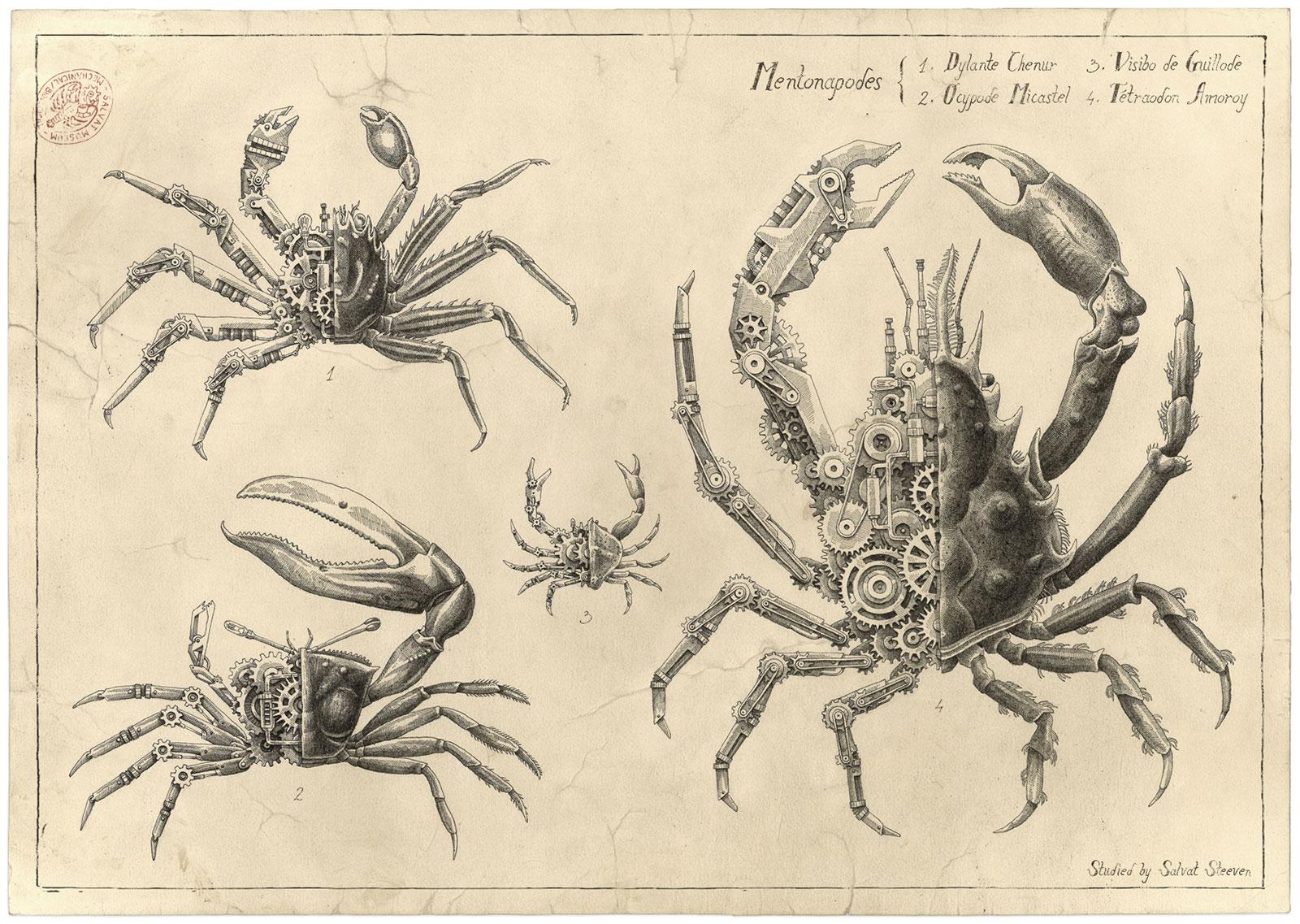 Steeven Salvat Crustacean study 4