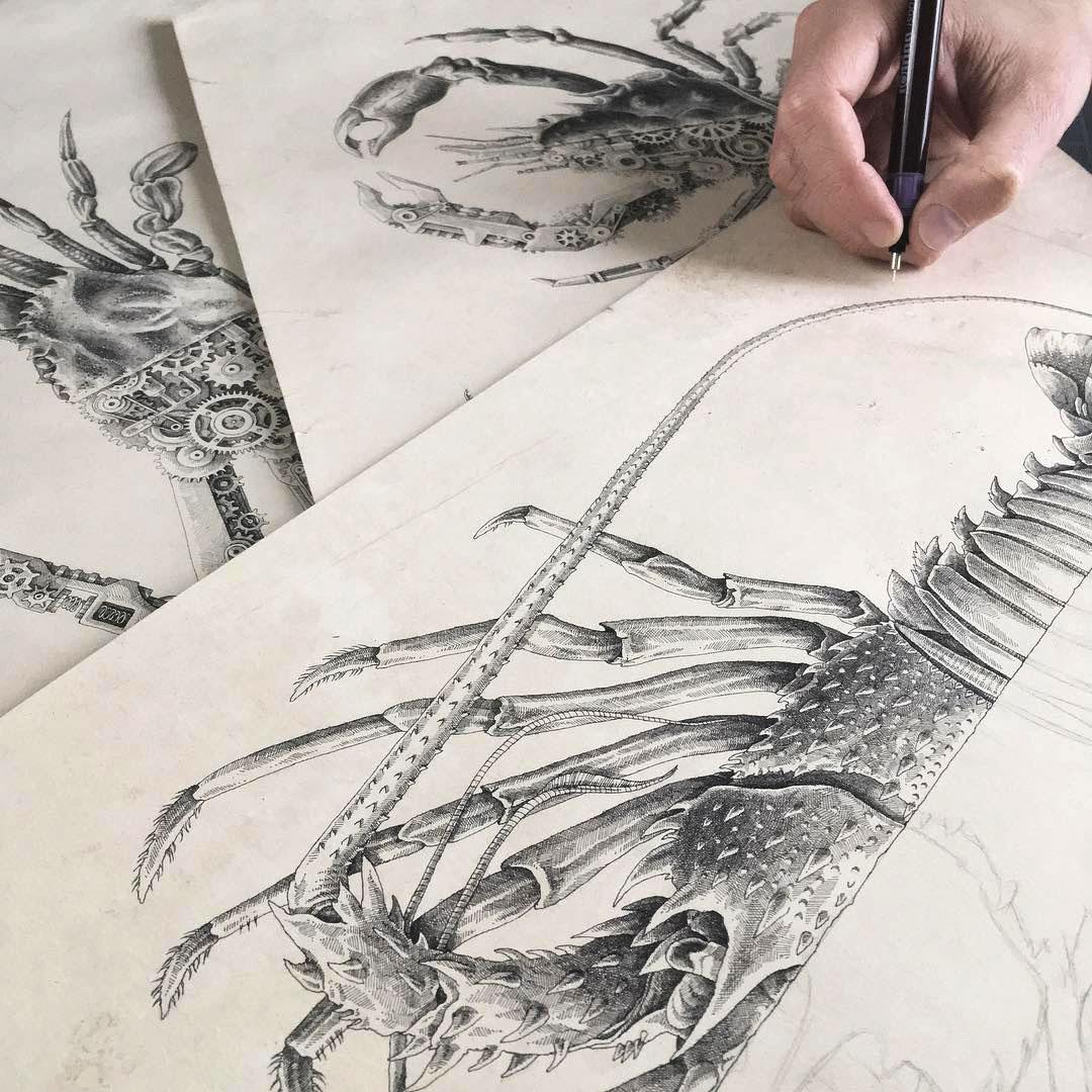 Steeven Salvat Crustacean study 6
