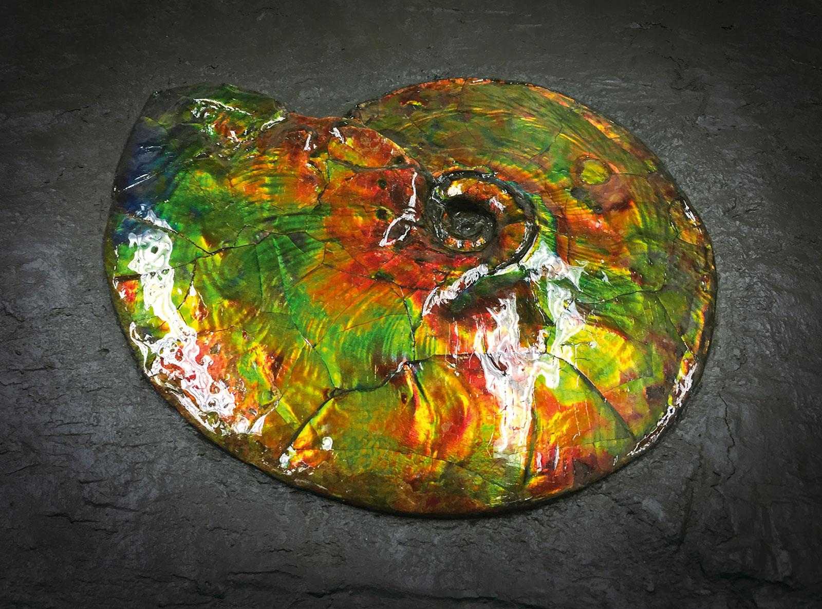 Christiaan van der Klaauw ammolite 1