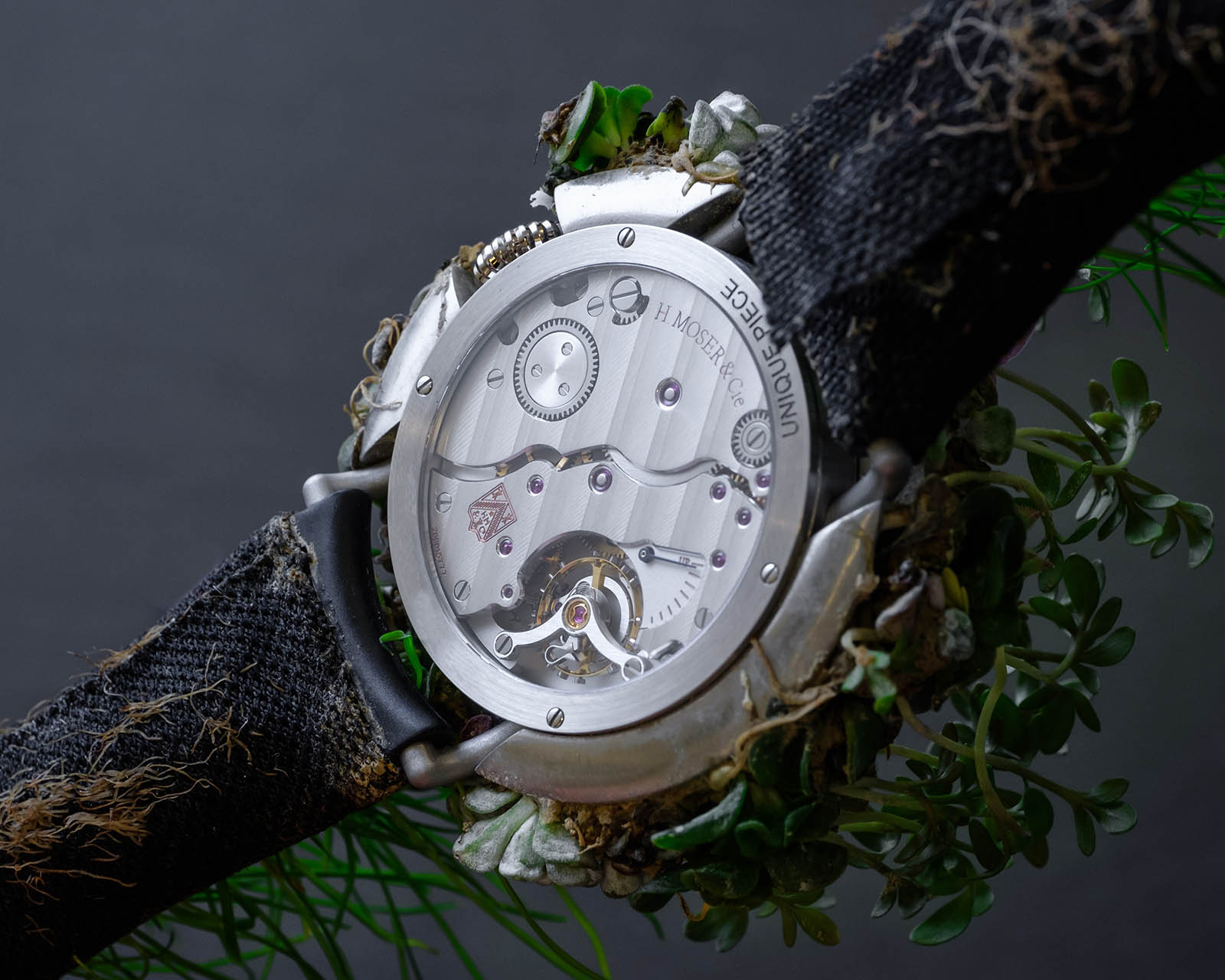 Moser Nature Watch 3