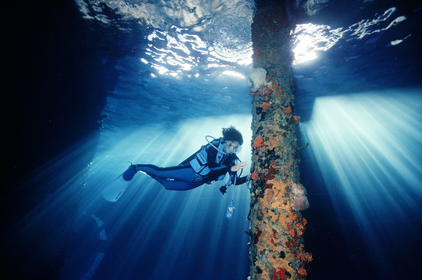 The National Geographic explorer-in-residence since 1998, Sylvia Earle. Photo - Rolex